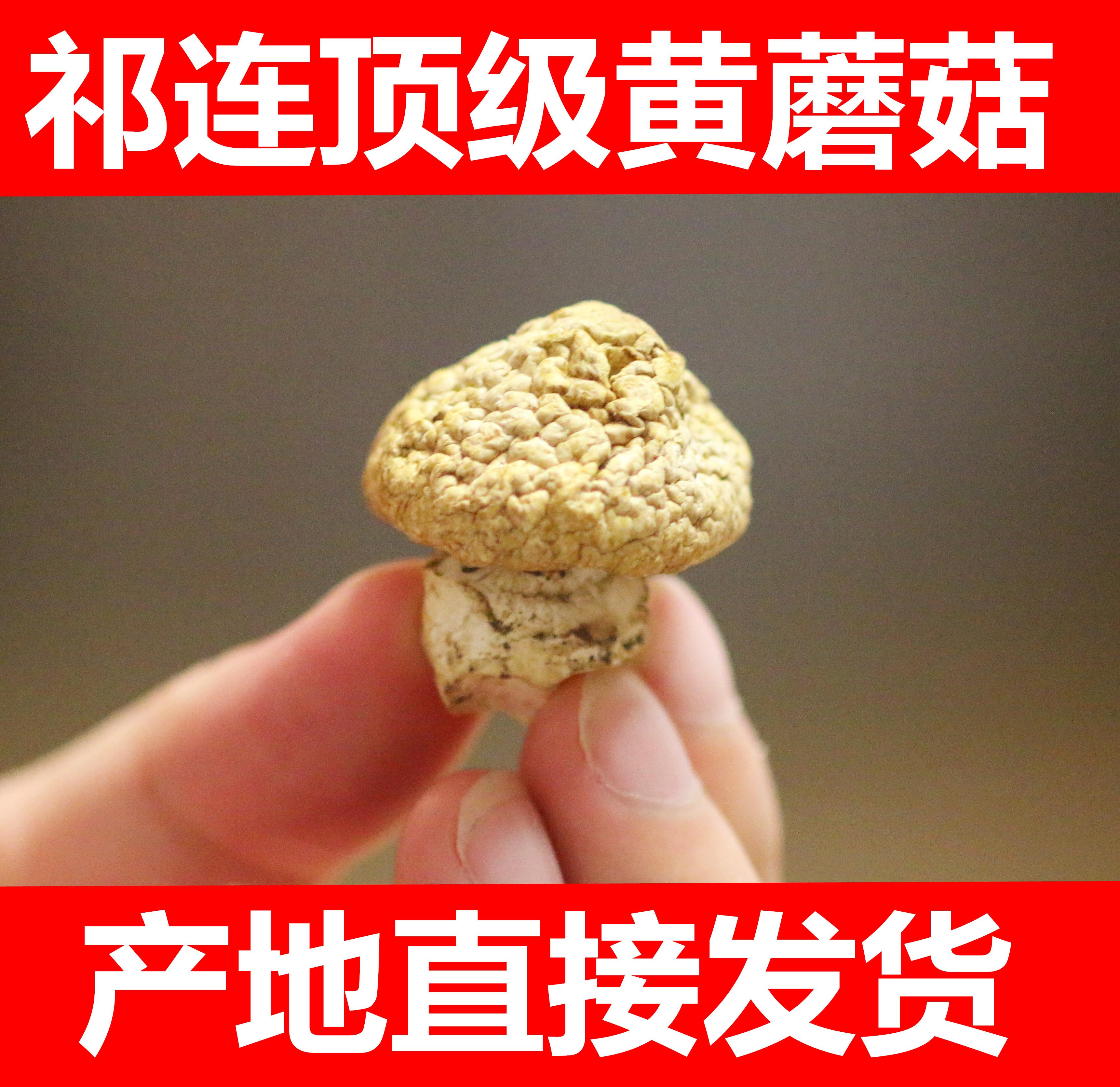艾氏青海特产黄姑 祁连山野生黄蘑菇 黄菇 钉子蘑菇 100克