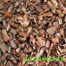 种植铁皮石斛种苗 蝴蝶兰花发酵松磷松树皮基质 盆栽盆景专用土