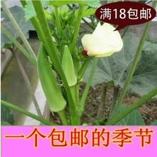 查看18元包邮 阳台蔬菜植物伟哥种子【黄秋葵种子 20粒】绿色人参补肾