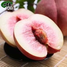萌兴 丽江雪桃 新鲜水果桃子 中秋礼品云南特产雪桃6个/盒