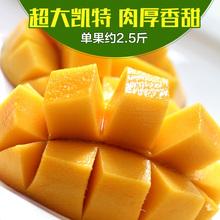 【贡天下】攀枝花现摘凯特芒 新鲜水果优质大芒果5斤 坏果包赔