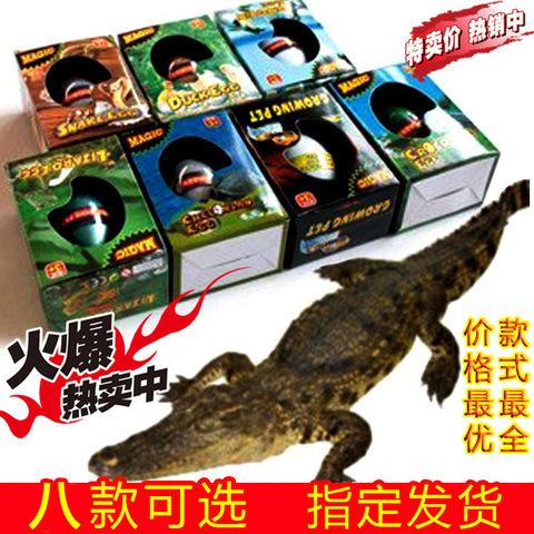 【5个包邮】儿童创意仿真科普玩具 大号恐龙蛋 水孵化复活蛋 盒装