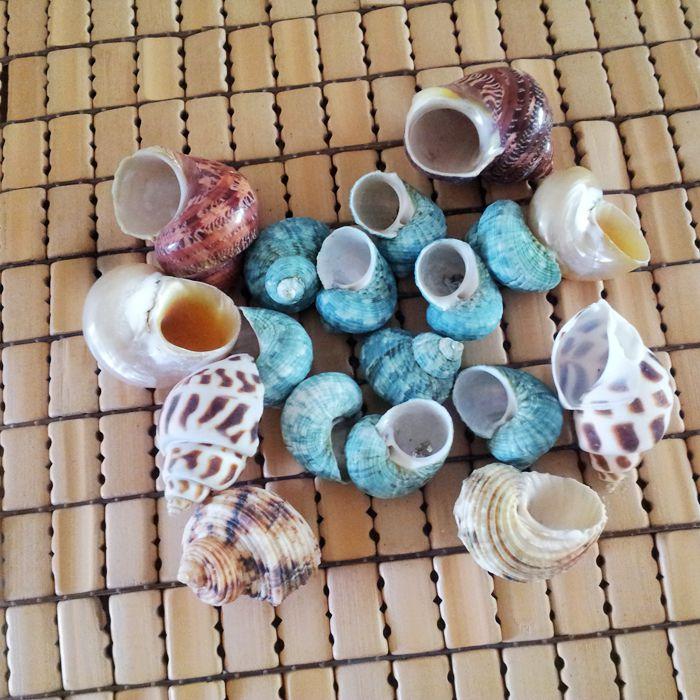 naturlige conch skaller engros - værdi mængde skaldyr fisk reproduktion - gamle - pakke grønne hjem akvarium landskab platform