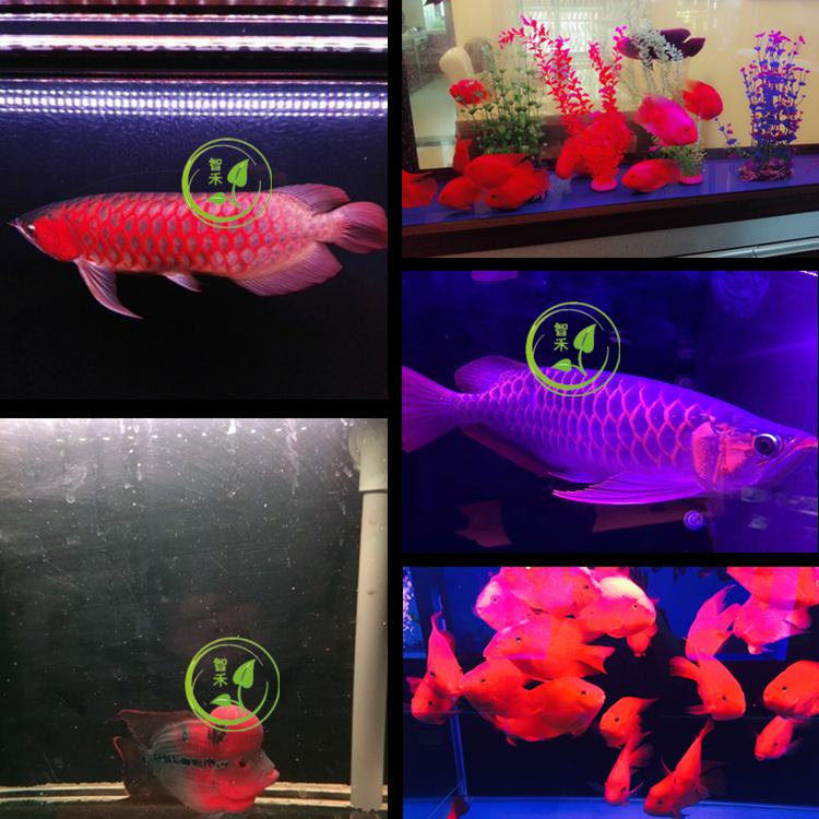 LEDライト照明t8水槽の水リモコン変色金竜レッドドラゴン魚専用燈水生動物の箱ランプ防水
