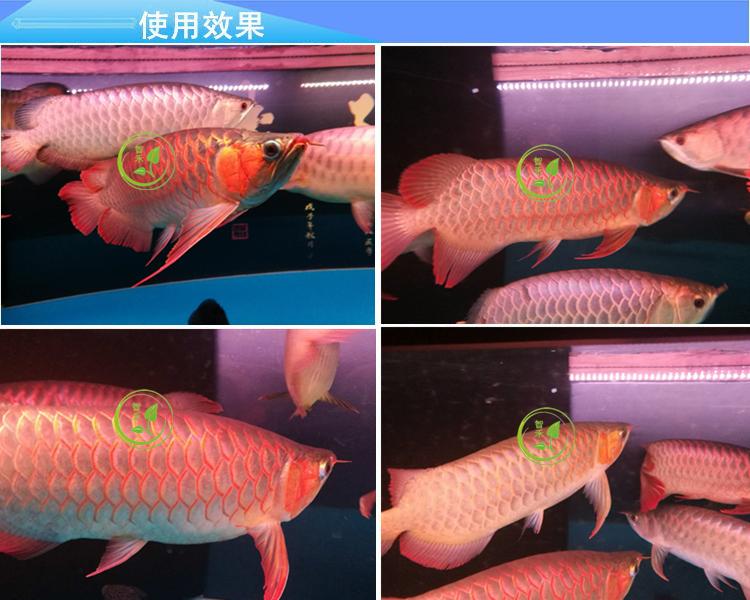 Wasser - LED - Lampe im Garten - und landschaftsbau Aquarium Lampe Aquarium Licht tauchen scheinwerfer Tricolor papagei jinlong rot arowana - lampen