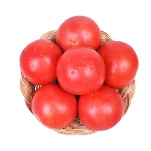 5斤装现摘新鲜番茄沙瓤西红柿自然熟纯天然农家蔬菜孕妇水果 包邮