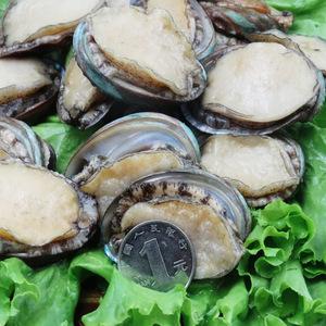东海冷水鲍鱼贝类海鲜水产约35只左右买2送红扇贝10只