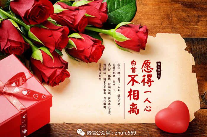 浪漫情人节 玫瑰