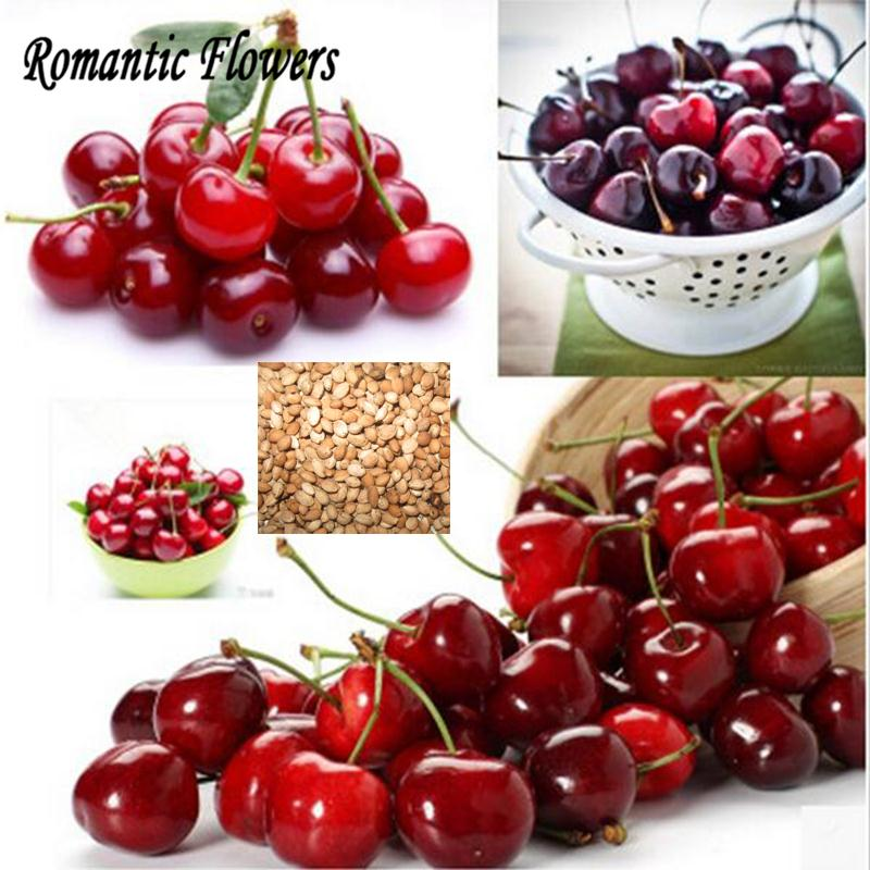 10pcs / Pack New Goods Delicious Sweet Cherry Seeds , Fresh