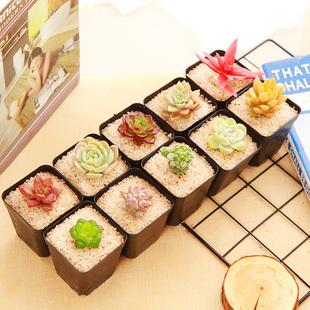 【极有家】10款多肉植物套餐(送盆送土)