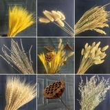 天然麦穗干花花束大麦棉花ins  风装饰摆件  卷后4.5元起包邮