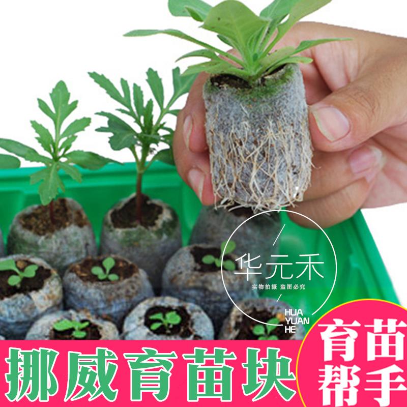 Na Uy nhập khẩu vườn ươm khối nén cây con thuận tiện cho cấy không làm tổn thương rễ làm vườn nguồn cung cấp đặc biệt cắt hạt giống