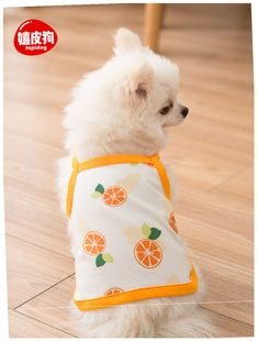 Summer cool and refreshing pet clothes than teddy bear brief
