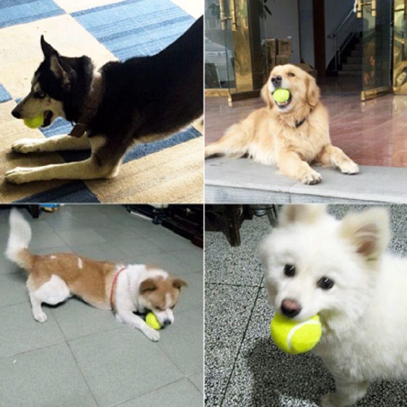 狗玩具球金毛泰迪弹力球耐咬磨牙网球