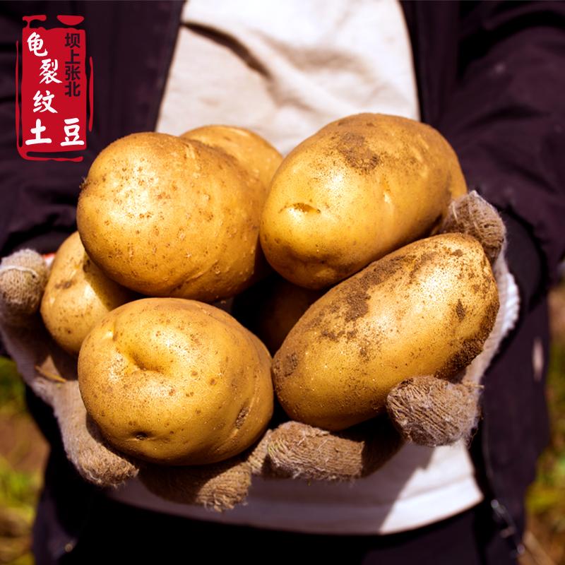 新鲜土豆羊粪土豆9斤农家自产坝上山药张北张家口马铃薯洋芋头s