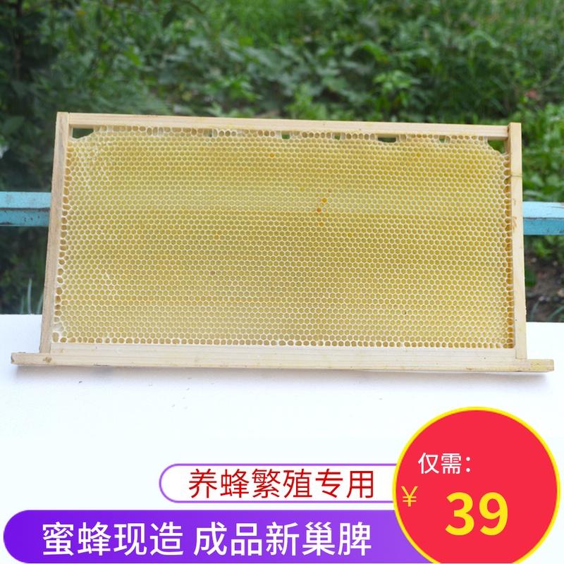 带框新巢脾蜜蜂造好成品养蜂专用工具巢础意蜂中蜂繁殖新蜂巢老脾