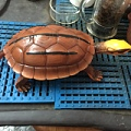 金钱龟模型三线闭壳龟模型办公室客厅汽车茶几摆件龟友天下出品