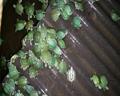 巴西龟苗活体龟小乌龟巴西彩龟宠物龟背甲3.5cm巴西龟包邮