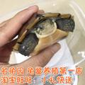 正宗北种大青头石金钱龟 小青头龟宠物龟乌龟活体 大青龟