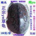 野外捕获纯正中华草龟 活体乌龟大头金线草100克田黄碳墨龟特价