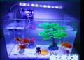包邮透明热弯方形玻璃生态金鱼缸乌龟缸小型迷你办公桌水族箱造景