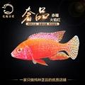 特价进口台系热带观赏鱼三湖慈鲷马鲷白化赤瞳火焰红活体慈雕包活